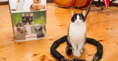 Krugovi za mačke, nova internet zaraza