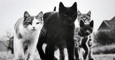Upoznajte prvog velikog mačjeg fotografa