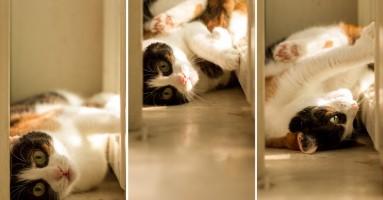 Želite li da usrećite svoju mačku?