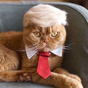 Princeza Leja, Donald Tramp, čarobnjak Gandalf ... od mačje dlake!!!