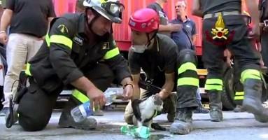 Vatrogasci 6 dana nakon zemljotresa u Italiji spasili mačku iz ruševina!